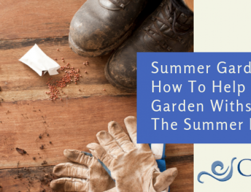 Summer Gardening: How to Help Your Garden Withstand the Summer Heat